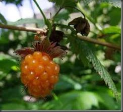 sberry